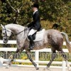 Graystone Dylan Crest (Smoking Gun) aka Dylan, 1999 Mare by Sea Crest